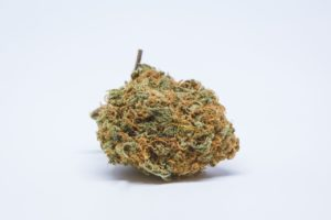 Sour Cheese Marijuana Strain